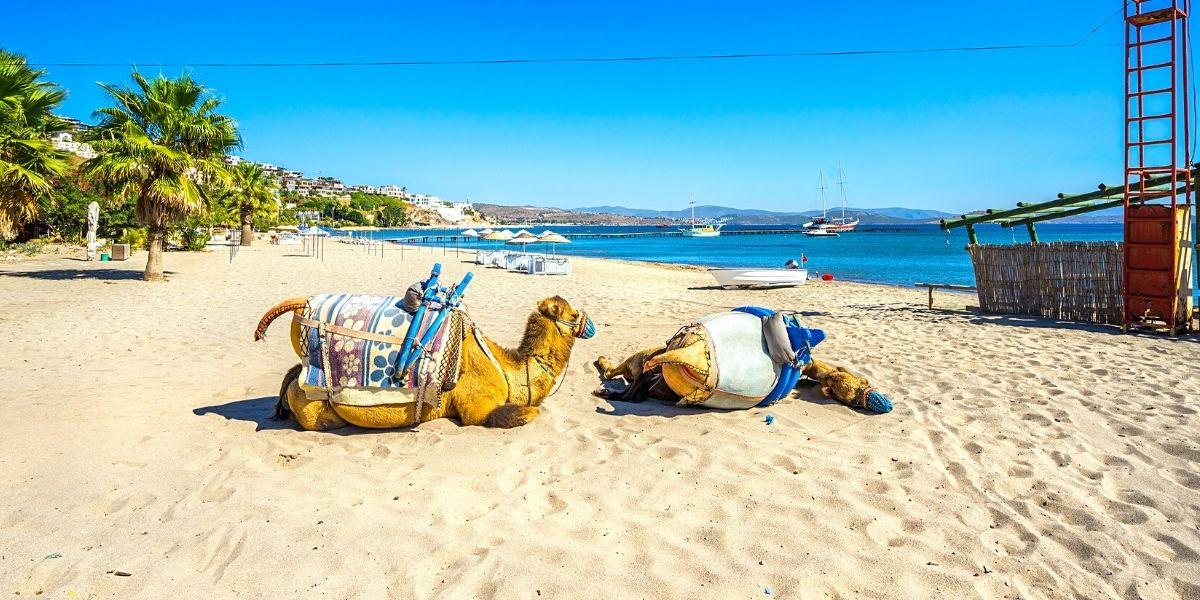 Пляж Camel Beach, де гуляють верблюди!