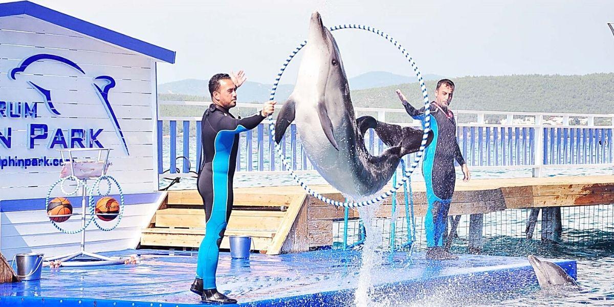 Фрагмент выступления в дельфинарии Бодрума