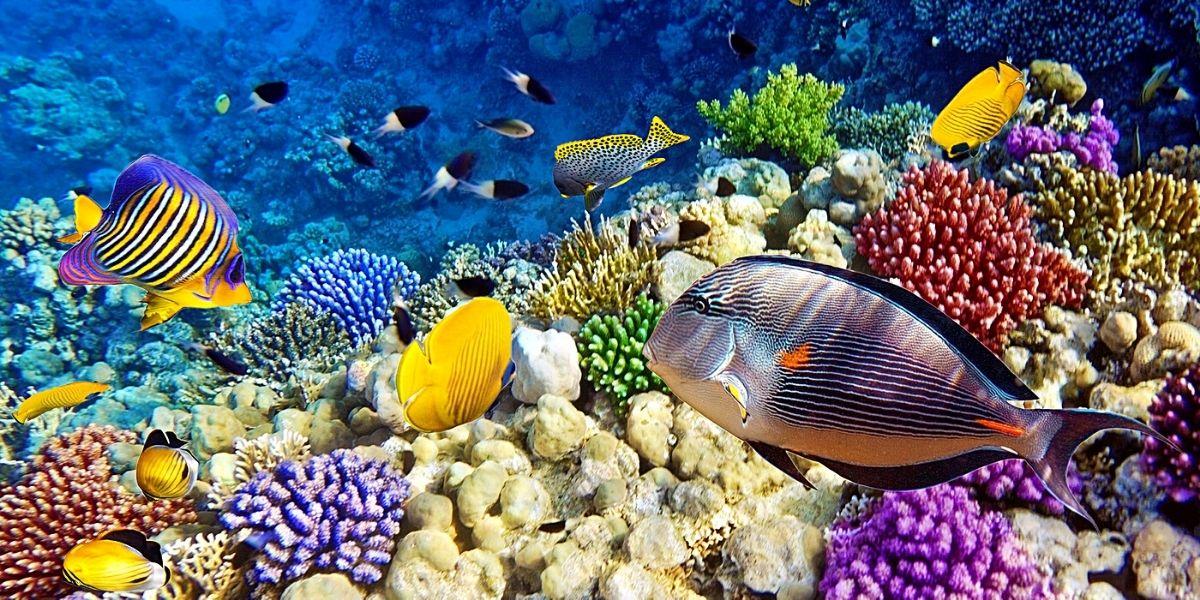 Фантастически красивый подводный мир Красного моря
