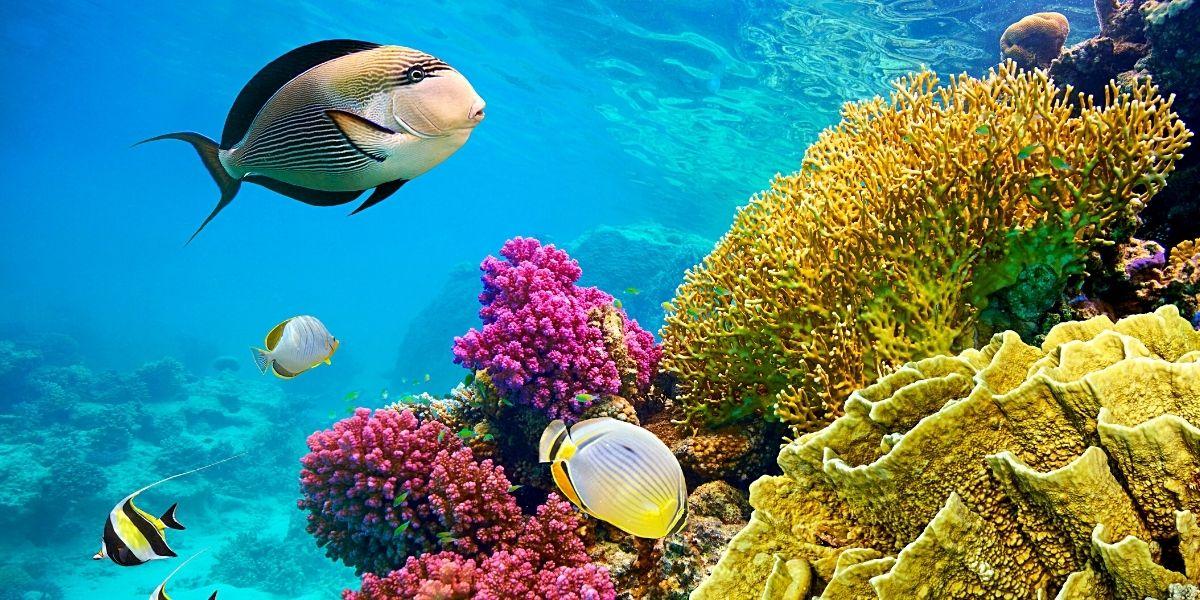 Неймовірний підводний світ Червоного моря